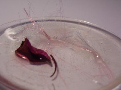 poussiere-vegetale-rose-et-ruban-21